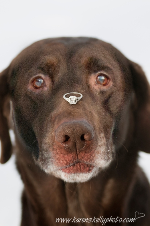 Dog with engagement ring on nose, Photographers in Durango CO, Durango CO Photographers, Durango Photography, Durango Wedding Photographers
